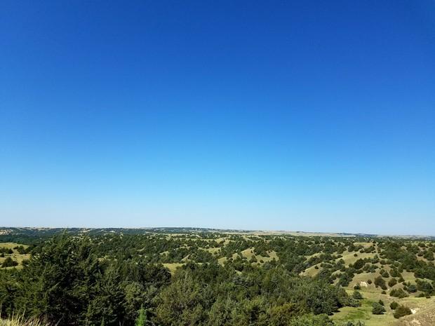 Eastern Redcedar in Nebraska Grasslands.