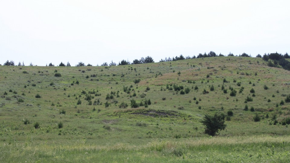 Eastern Redcedar invasion in western Nebraska Grasslands.