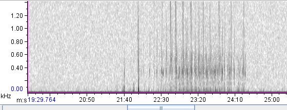 Spectrogram of an underwater calling Chiricahua Leopard Frog