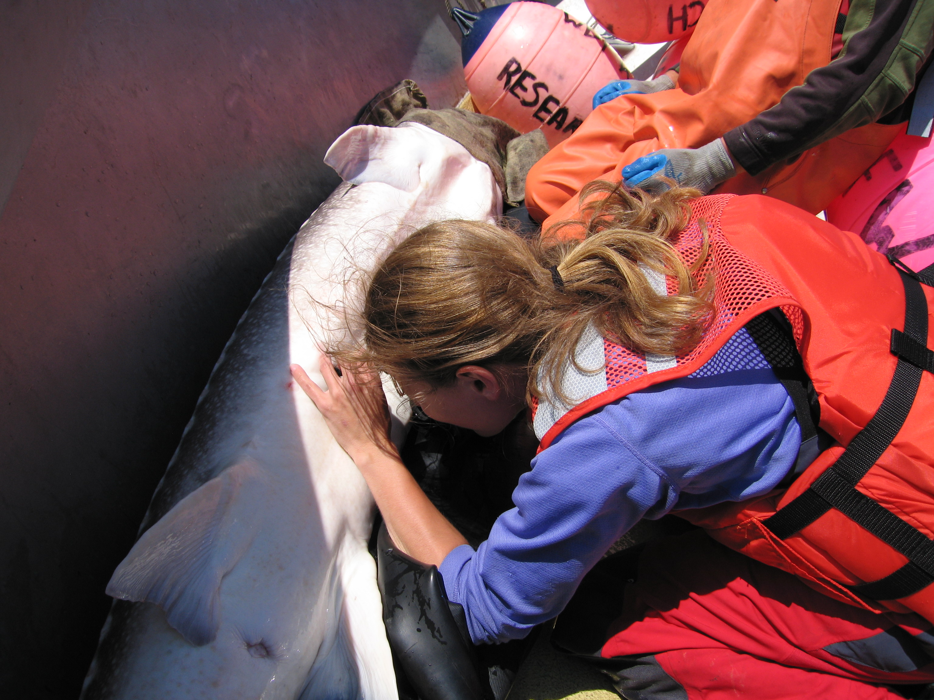 Mariah Talbott with otoscope and Columbia River white sturgeon