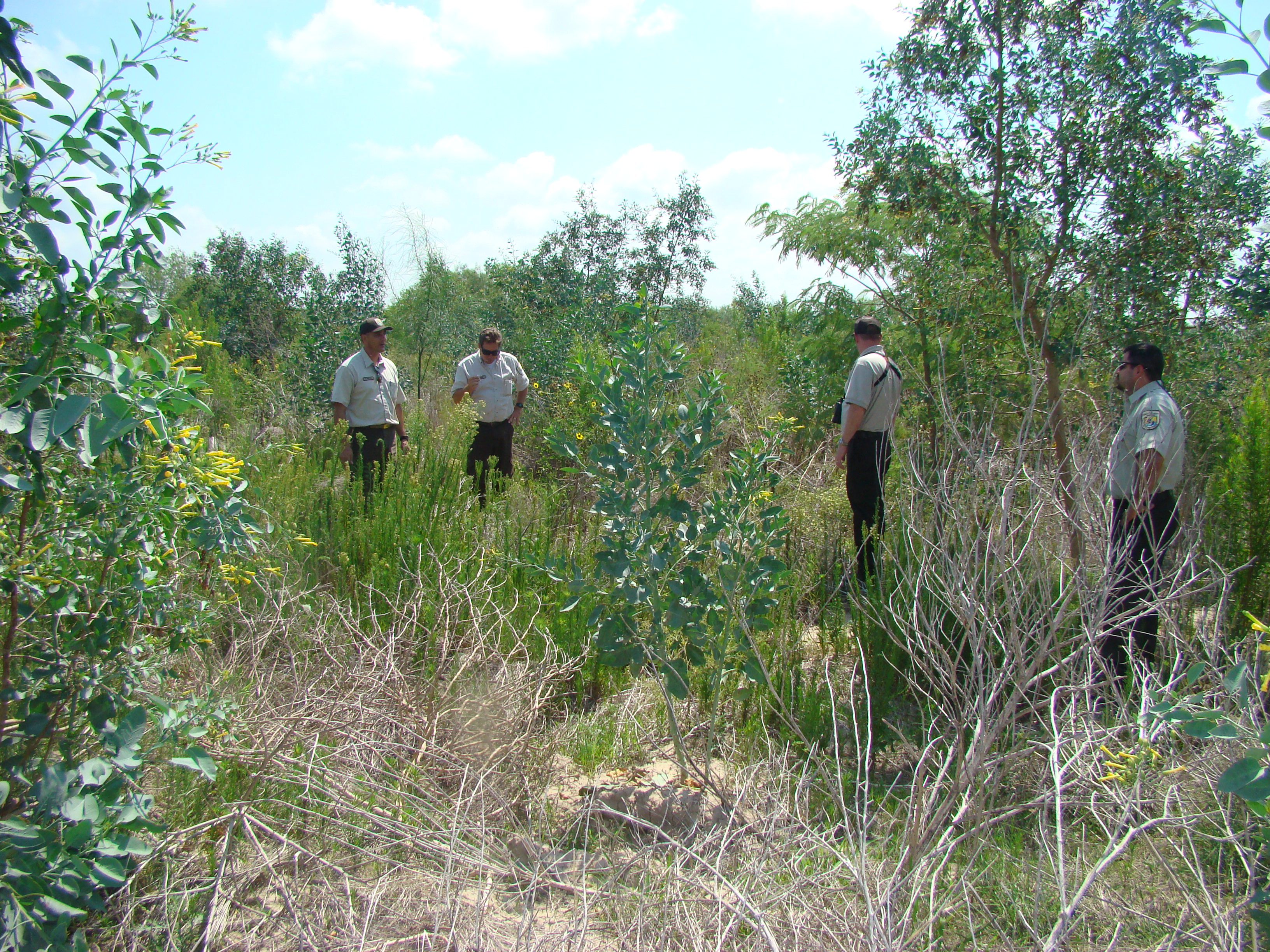 USFWS Forest restoration efforts in Lower Rio Grande Valley NWR, 2010