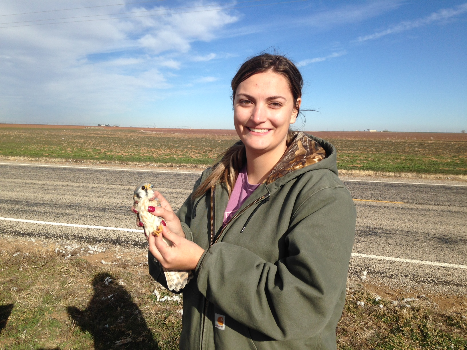 Jennifer Harris, MS student with the Texas Unit, is studying long term site occupancy and productivity of American Kestrels in relation to wind energy development and annual variance in weather conditions.