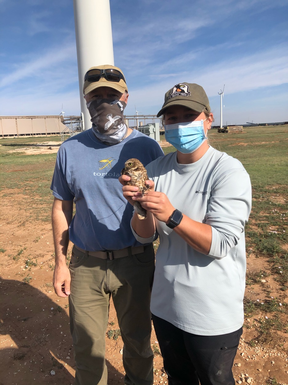 The Texas Unit is studying Burrowing Owl movement and habitat use in and around wind turbine placements.<br><br>