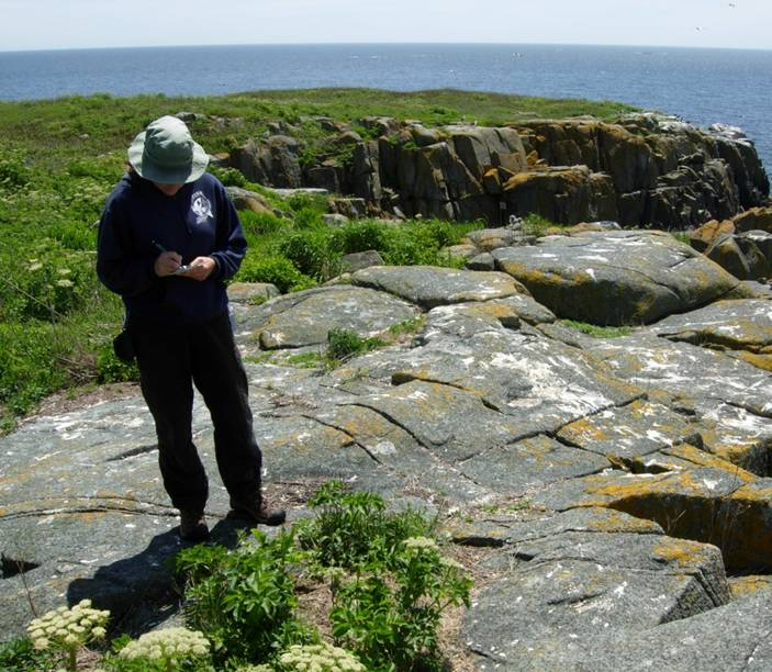 Left: Monika parsons recording data about gull nest on Jordan&rsquo;s Delight Island, Maine<br />