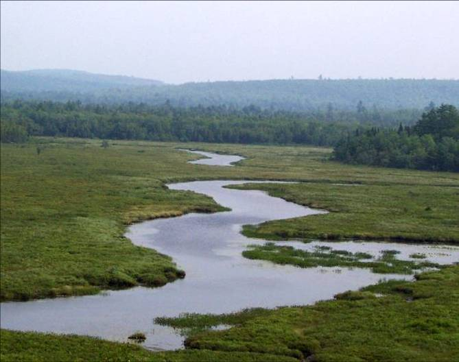 Wetland in eastern Maine.<br />