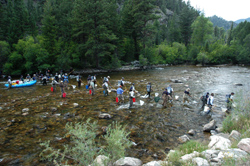 Electrofishing crews removing brown trout from Cache la Poudre River, CO