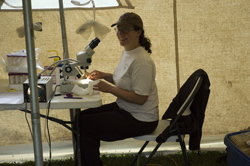 Christine Clapp indentfying T. tubifex samples at Spring Creek, CO.