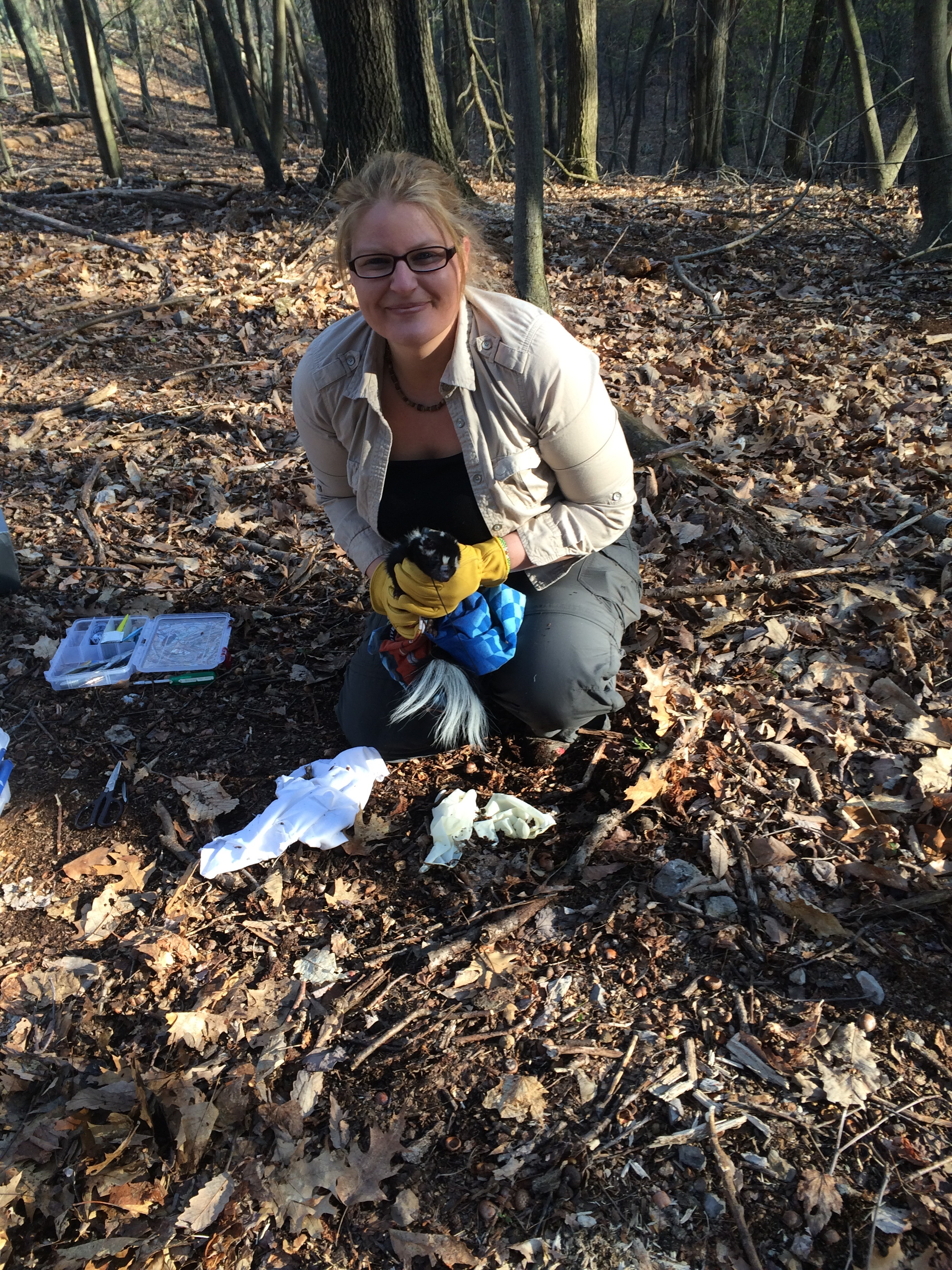Eastern spotted skunk telemetry project