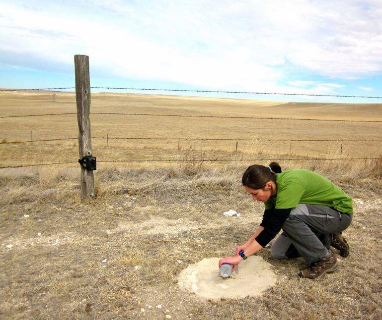 Lucia Corral sets a camera 'trap' in an effort to document swift fox in Western Nebraska.