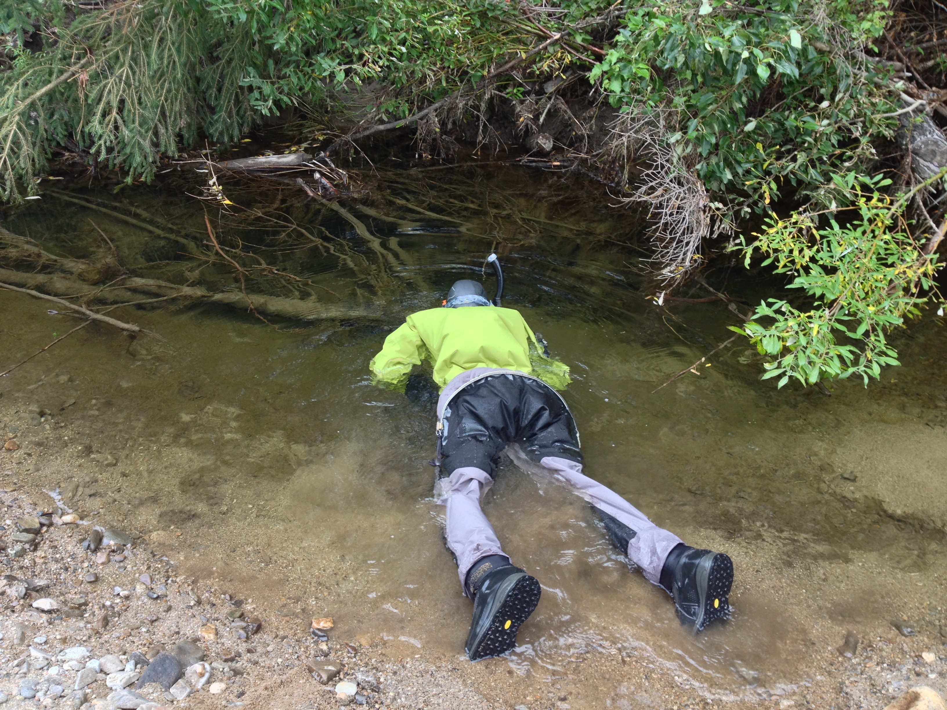 Allison Matter searches for juvenile Chinook salmon in Monument Creek, Alaska