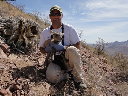 James Cain with desert bighorn sheep lamb