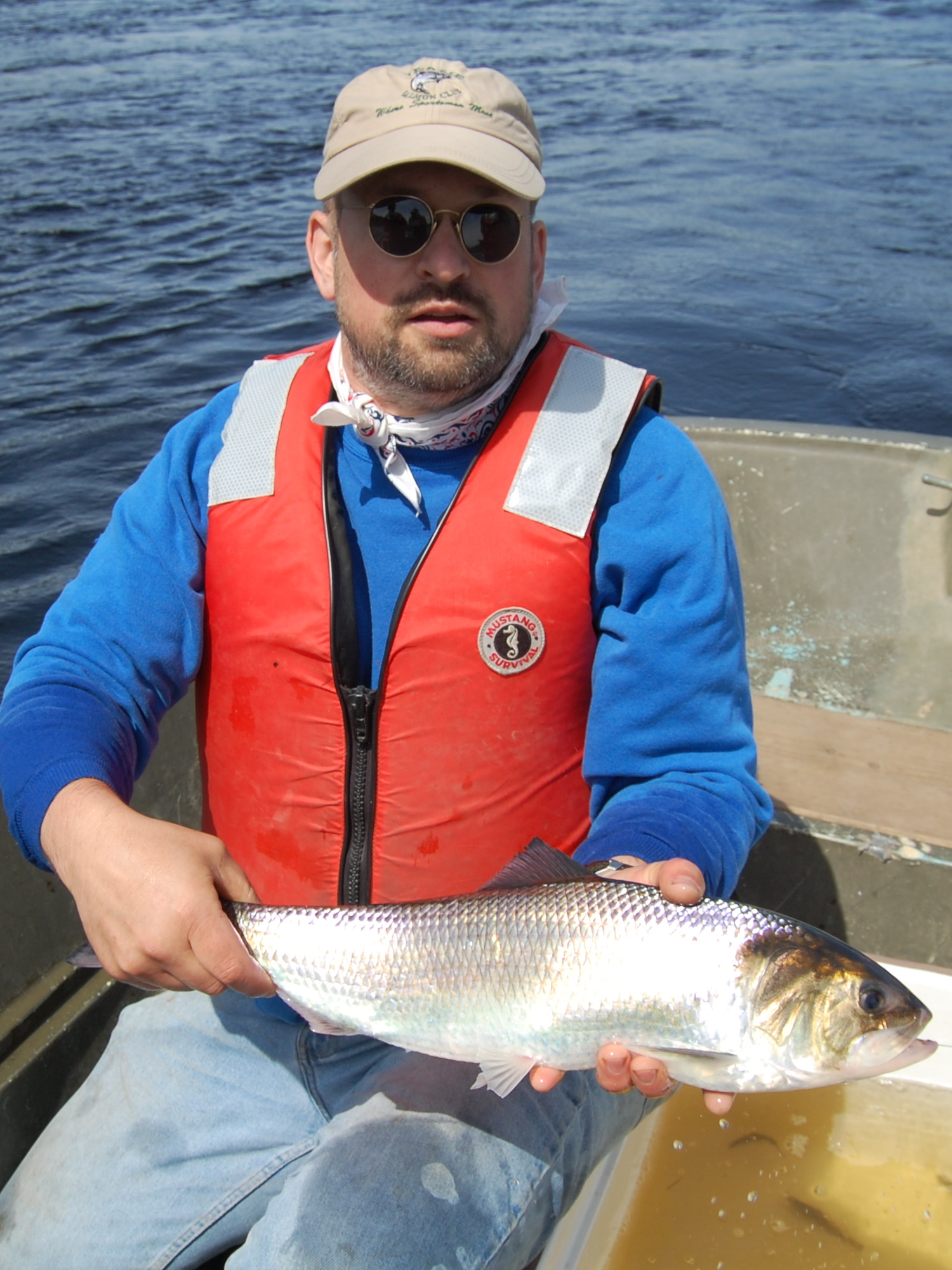 Sampling American shad on the Penobscot River.