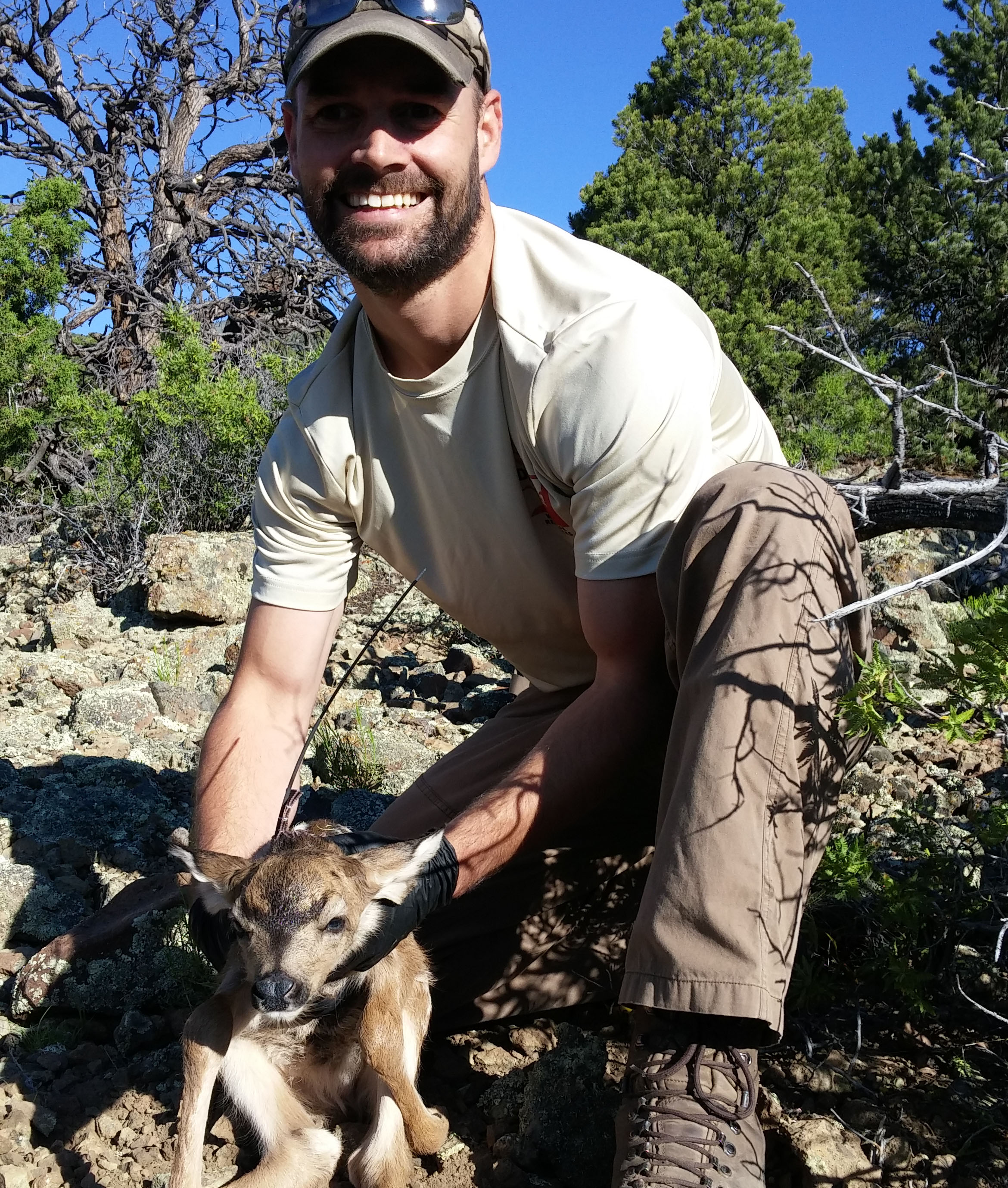 Kent Hersey working with Mule Deer research.