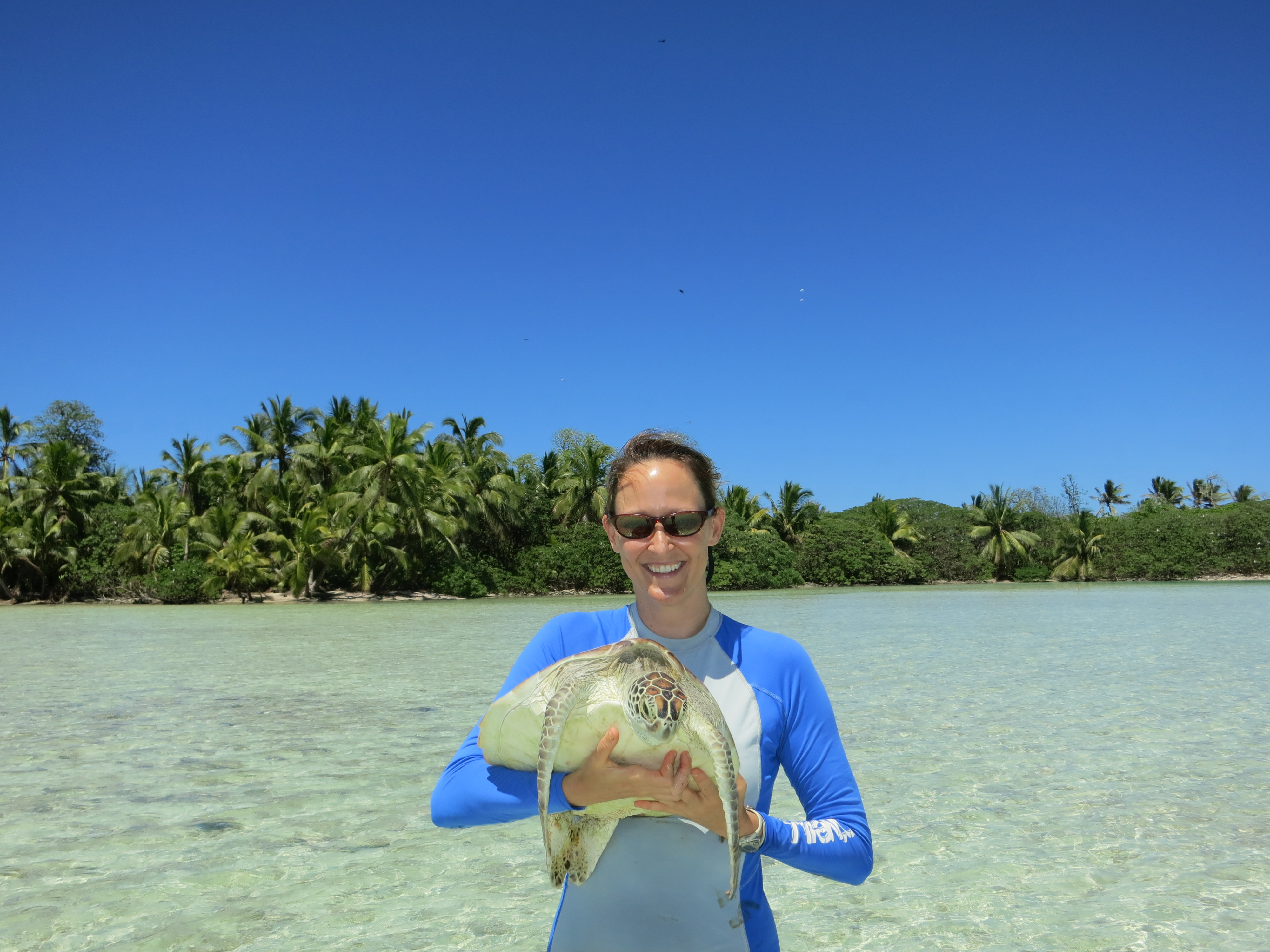 Green sea turtle research at Palmyra Atoll, Central Pacific (2012)