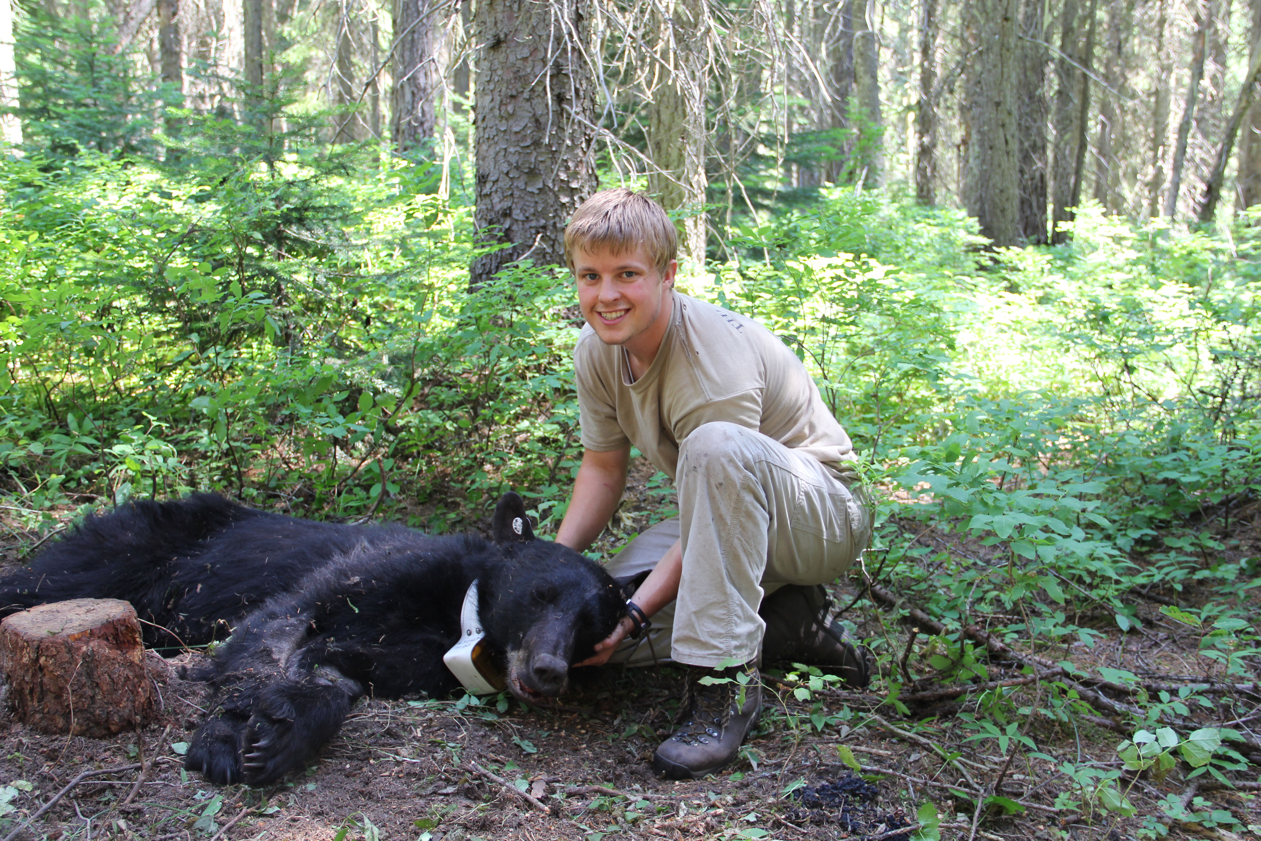 Matt Gould with a black bear captured in Montana.