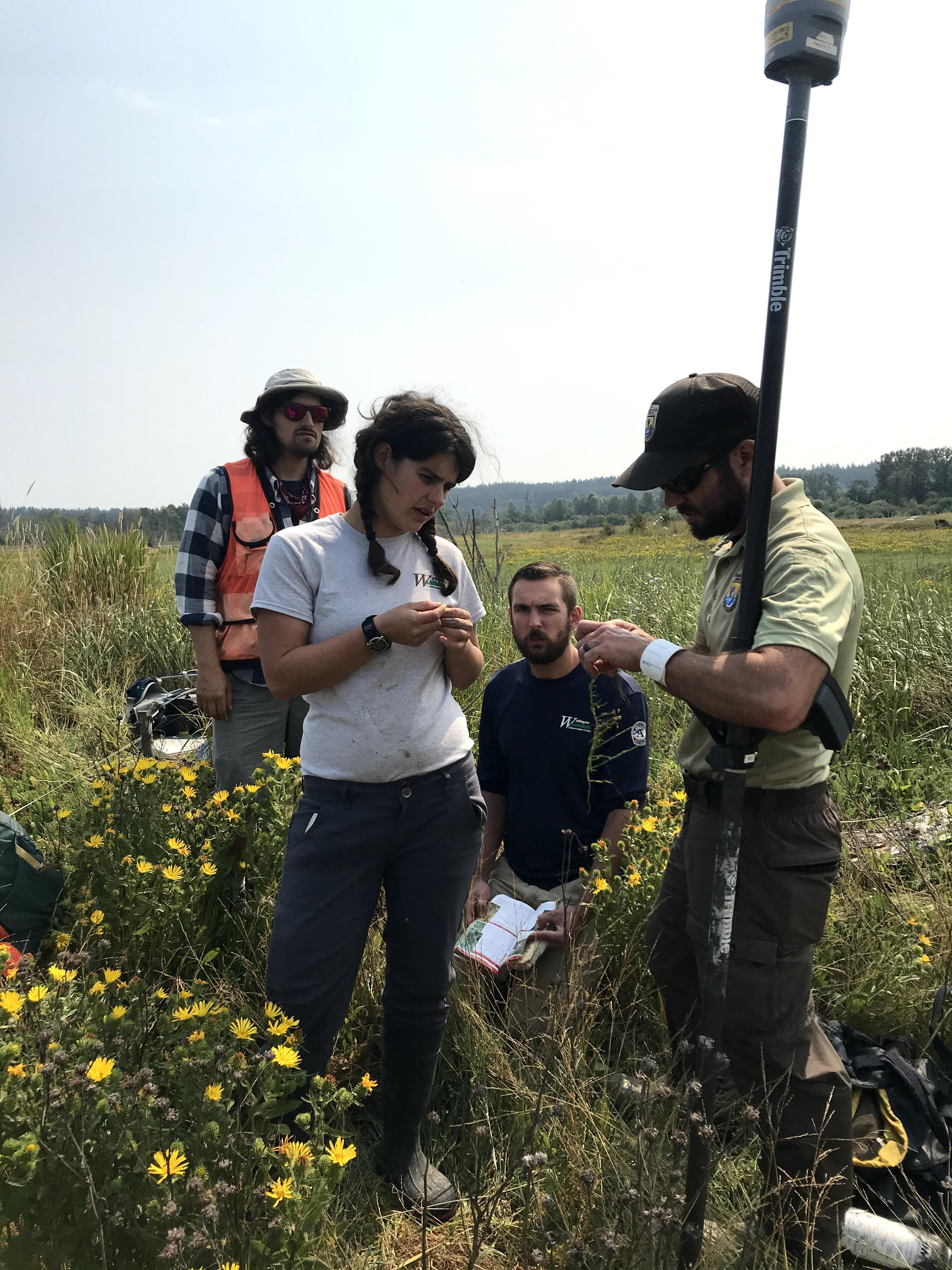 A refuge biologist works with technicians to ID some pickleweed.