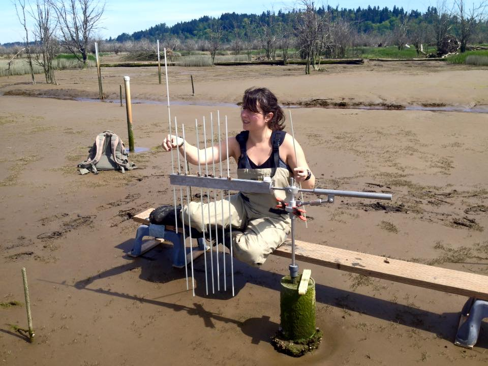 Dr. Melanie Davis measures marsh elevation change in the Nisqually River Delta using a Surface Elevation Table.