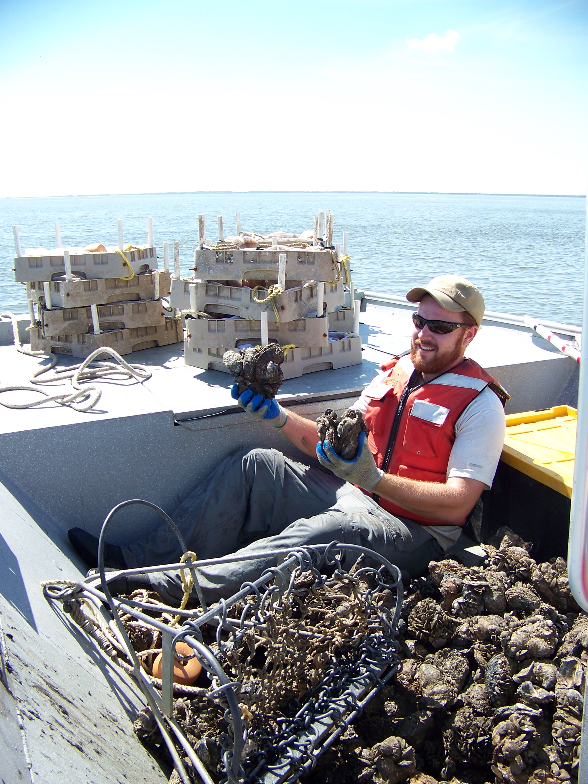 Graduate student Steve Beck with his oysters