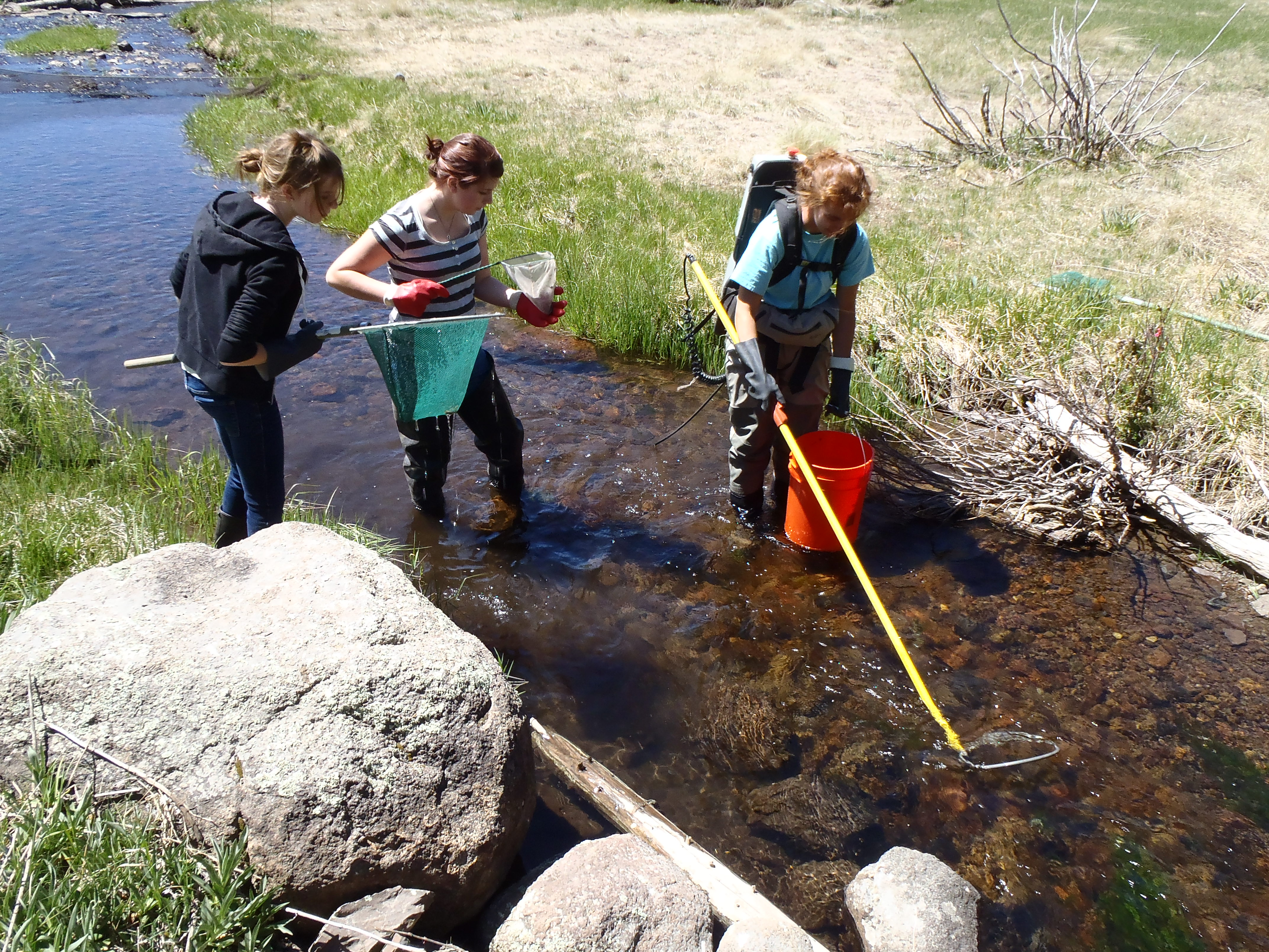Arizona Coop students and volunteers electrofish for Apache Trout in an Arizona mountain stream.