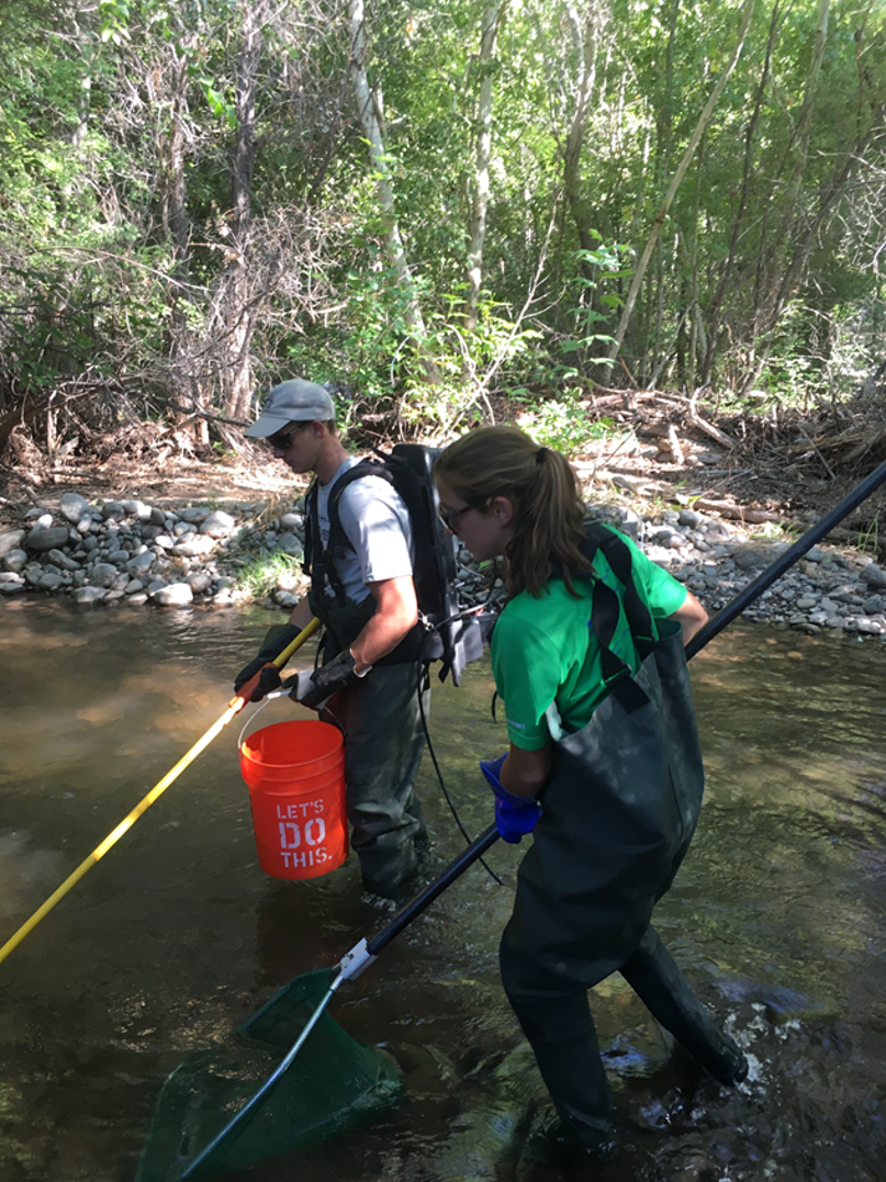Arizona Coop Unit students electrofish on a project to identify fish habitat relationships.