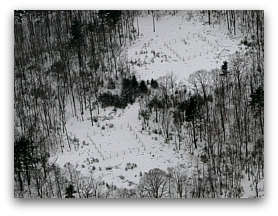 Aerial view of exclosures for moose/deer browsing experiment.