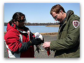 Jillian Peirera and Dan Clark (PhD candidate) attach patagial tag to gull.