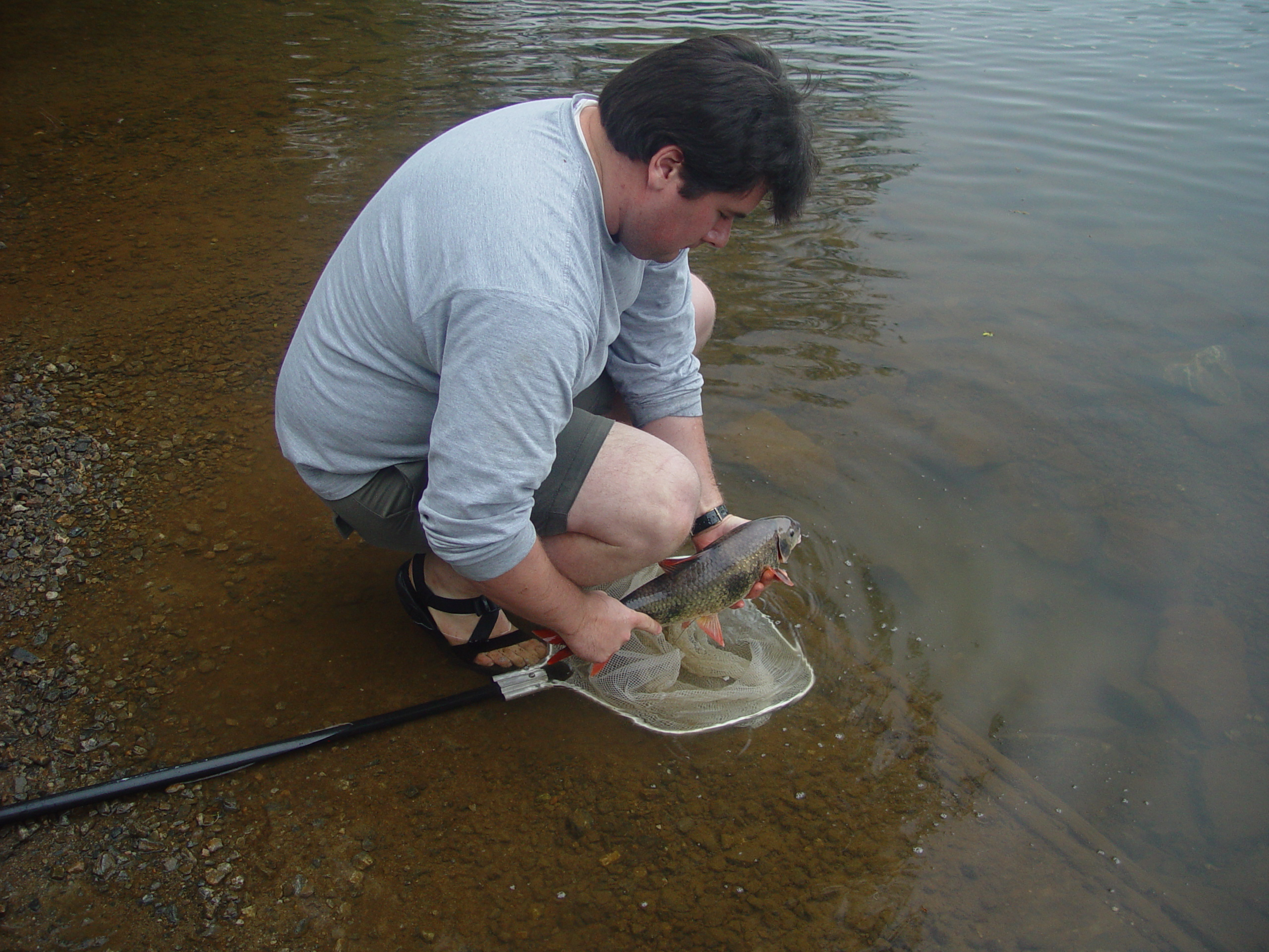 Tim Grabowski releases a radio-tagged robust redhorse into the Ocmulgee River, Georgia.